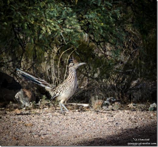 Roadrunner Burro Creek campground US93 Arizona