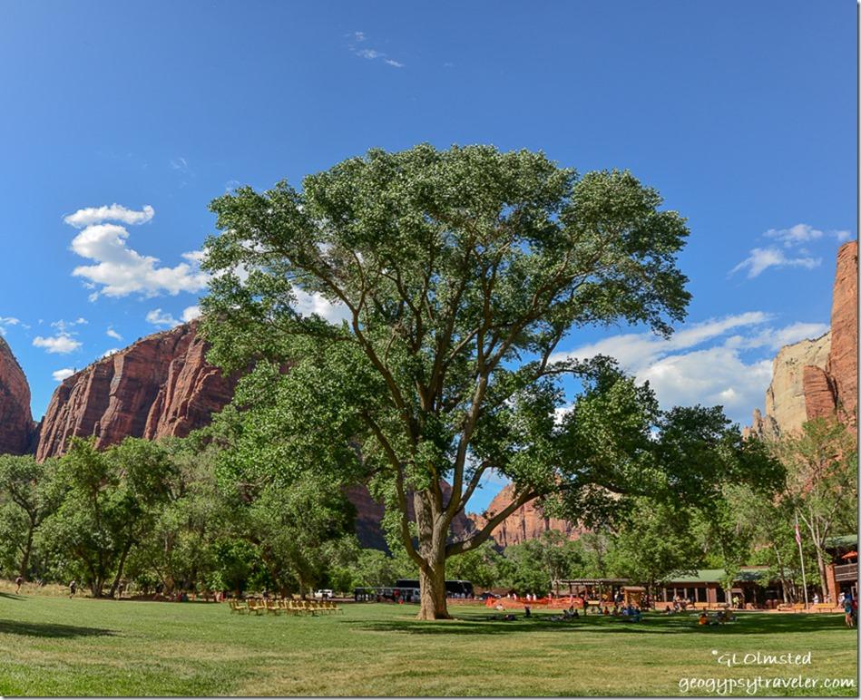 Big tree Zion National Park Utah