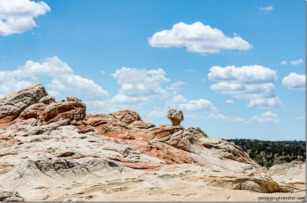 Toadstool White Pocket Vermilion Cliffs National Monument Arizona