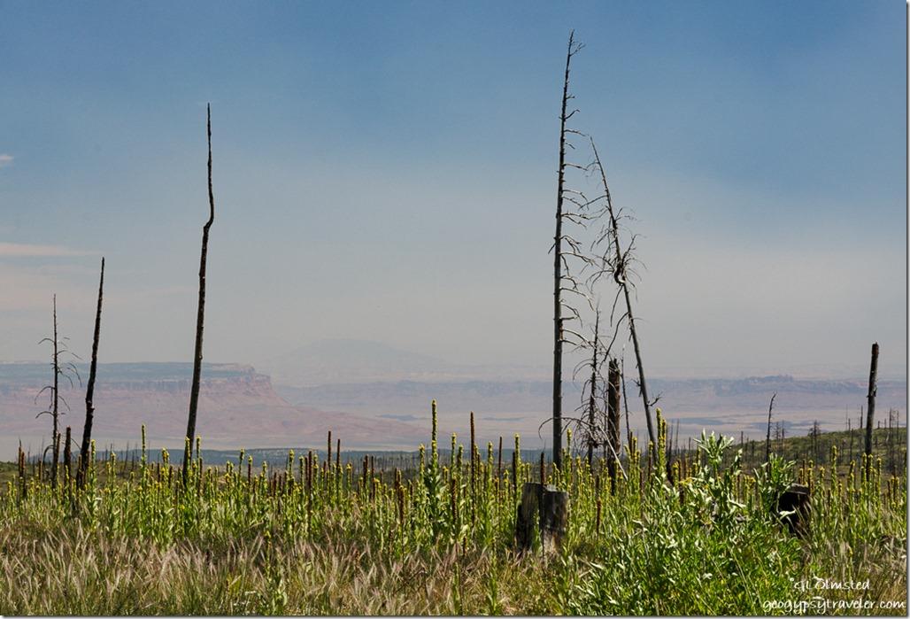Paria Plateau & Navajo Mountain thru Warm Fire SR67 Kaibab National Forest Arizona