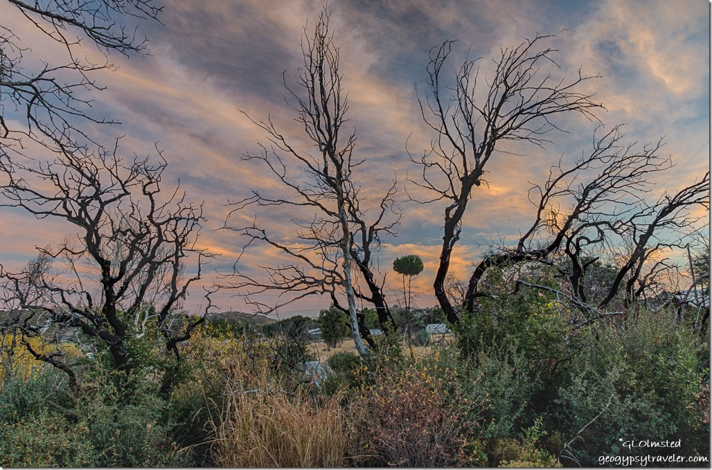 trees sunset Yarnell Arizona