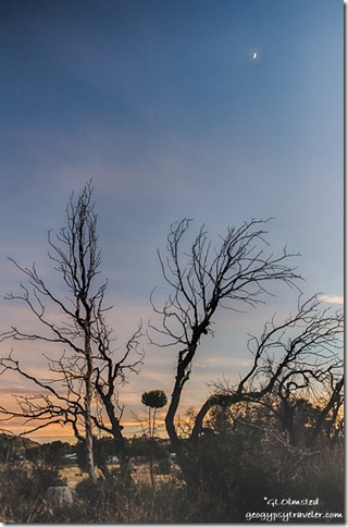burnt trees sunset moon Yarnell Arizona