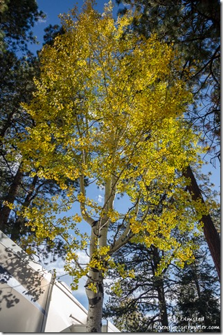 Fall aspen by RV North Rim Grand Canyon National Park Arizona