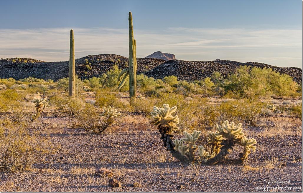 desert late light Kofa NWR Arizona