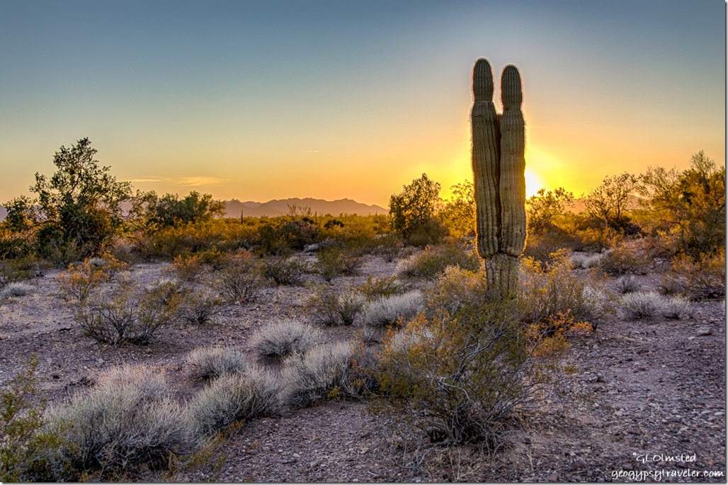 saguaro sunset Kofa National Wildlife Refuge Arizona