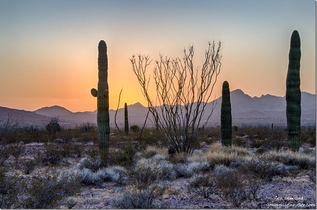 saguaros ocotillos Chocolate Mountains suset King Valley Road Kofa National Wildlife Refuge Arizona