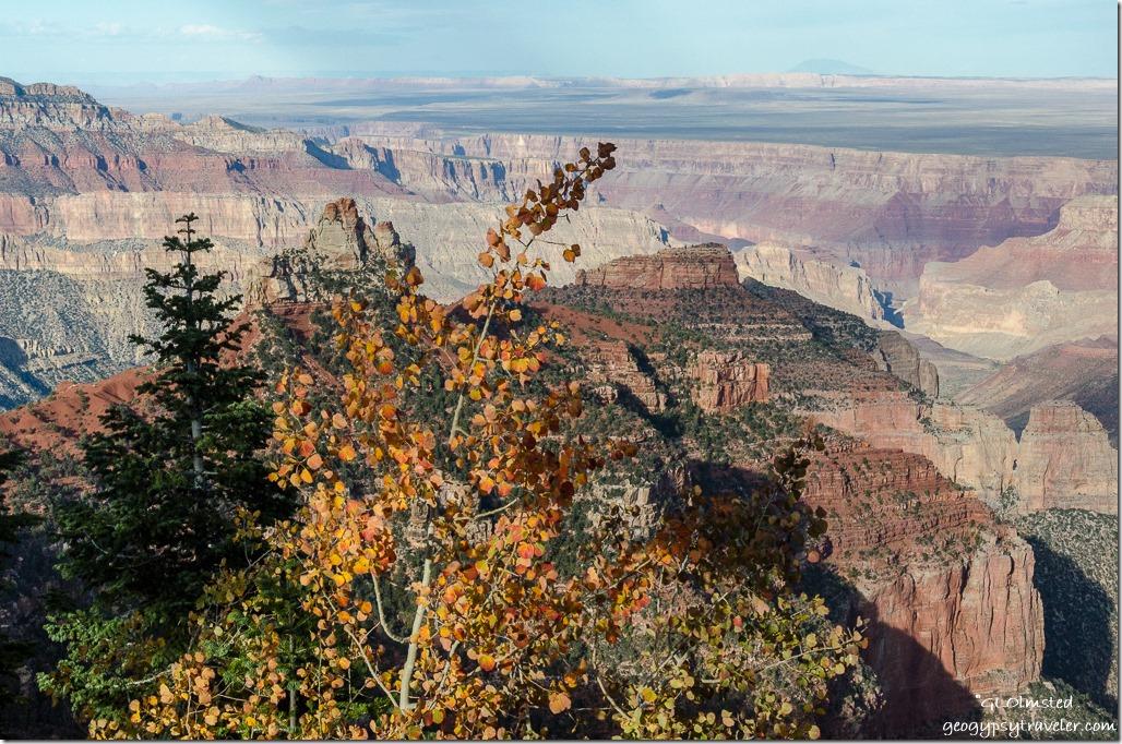 Fall aspen, Brady Peak & beyond Ken Patrick trail North Rim Grand Canyon National Park Arizona