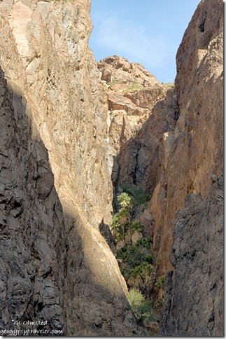 California Palms side canyon from Palm Canyon trail Kofa NWR Arizona