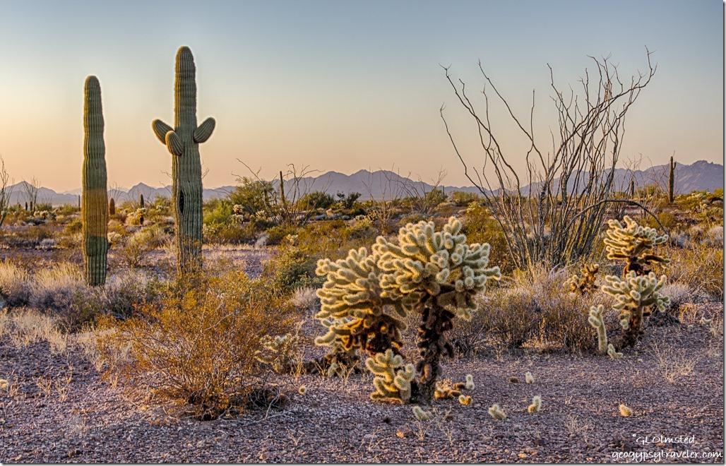 desert Dome Rock Mountains late light Kofa NWR Arizona