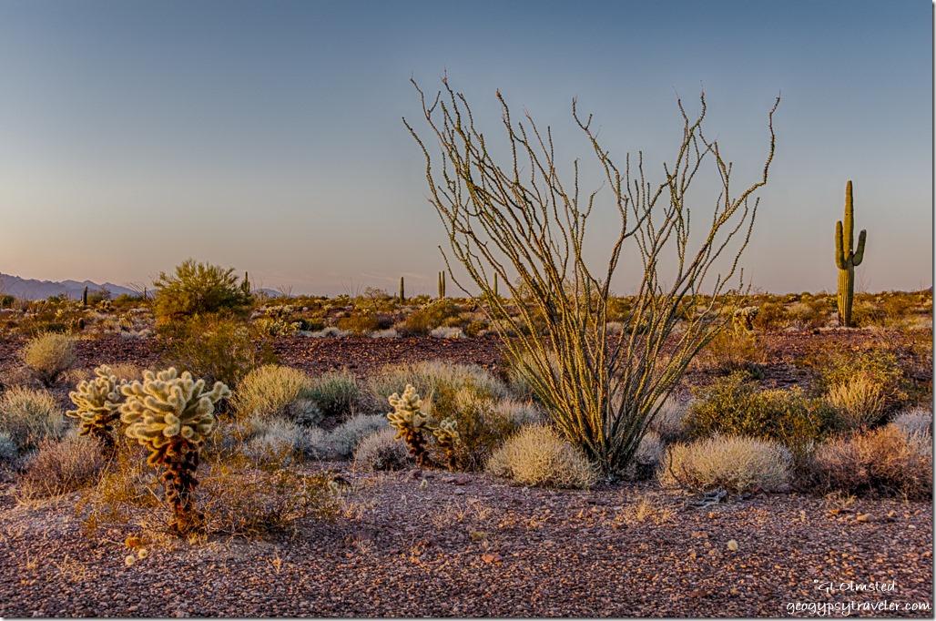 sunset desert Kofa NWR Arizona
