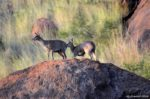Wildlife in the volcanic crater at Pilanesberg Game Reserve