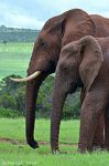 Return visit to Addo Elephant National Park