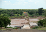 Wildlife share the waters in Kruger National Park