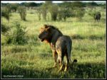 2014 South Africa diversity Ecotour